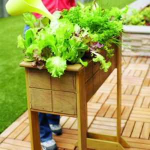 saladbox-diy-main-l